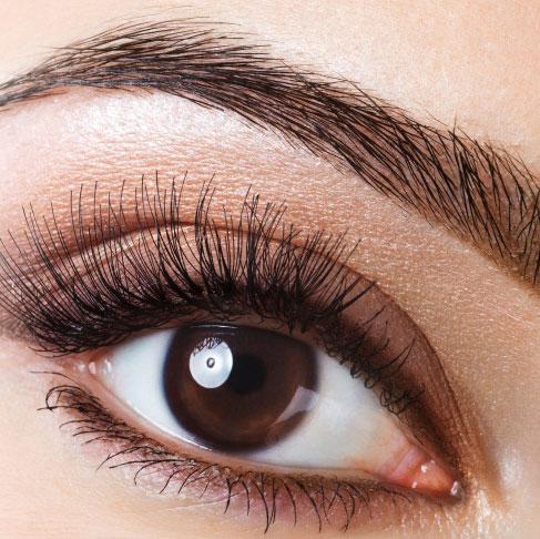 lash-brow-wax-tint